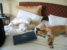 Beaver Creek pet friendly hotels, dog friendly hotels near Beaver Creek, Colorado; hotels in Eagle County pets allowed